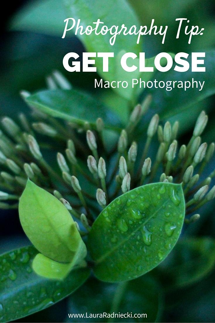 Photography Tip- Get Close - Macro Photography