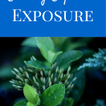 Editing Exposed - Exposure | Photography Tips and Information by Laura Radniecki