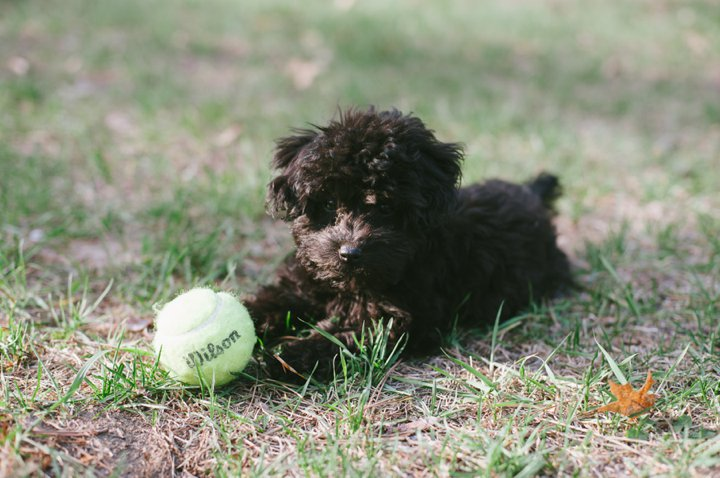 Remy and the Tennis Ball