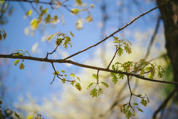 Spring Nature - Laura Radniecki - Minnesota Photographer