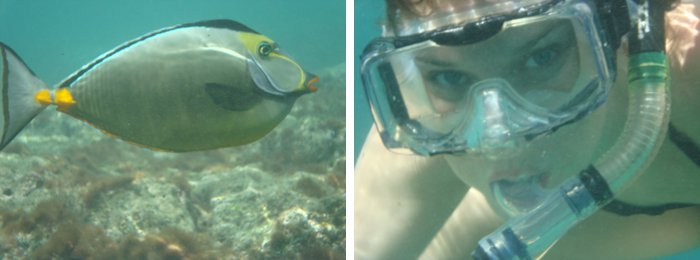 Snorkeling on Oahu, Hawaii by Laura Radniecki