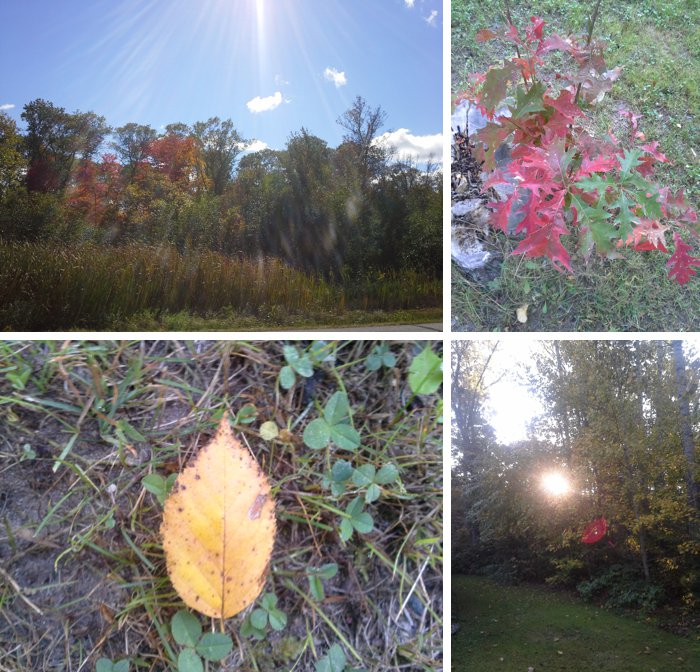 Fall Leaves, Camping + A Book Sale | Gratitude Friday – V.16