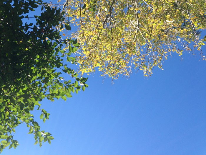 Fall Leaves in Minnesota