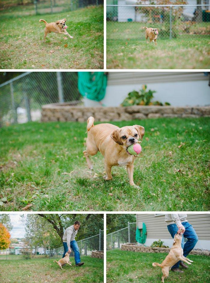 Fargo Family | Brainerd MN Pet Photography | Laura Radniecki | Brainerd MN Pet Photographer