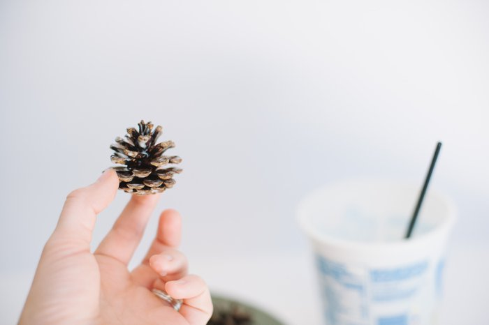 How to make cinnamon pinecones | Holiday and Christmas Pinecone Crafts