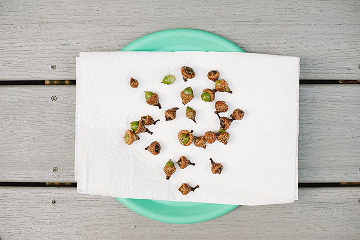 Dry clean acorns on paper towels before baking in the oven
