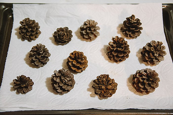 Dry pine cones are fully open and ready for crafts.