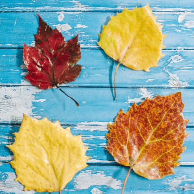 How to Make DIY Mod Podge Leaves to Preserve for Fall Crafts