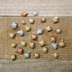 How to Paint Acorns for Crafts and Decorations