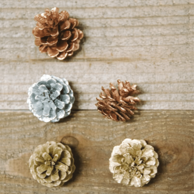 How to Paint Pine Cones for Crafts and Decorations