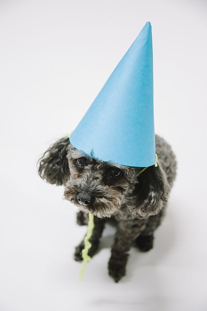 how to make a paper party hat and a toy poodle wearing the party hat