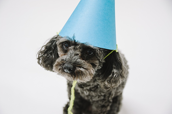 dog wearing a diy paper party hat